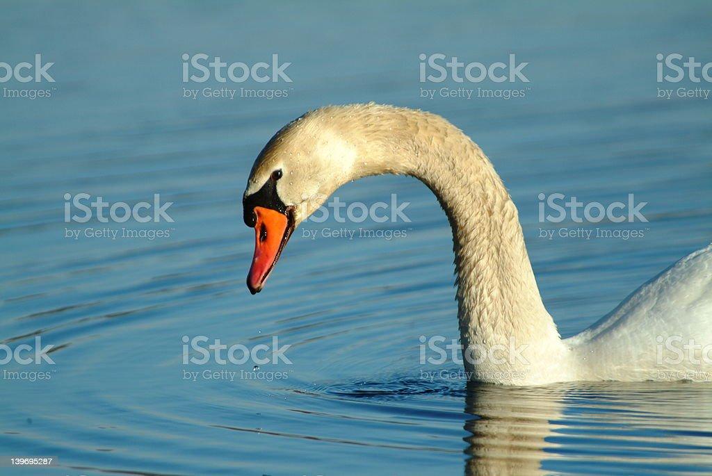 Swan lake com queda d'água foto royalty-free