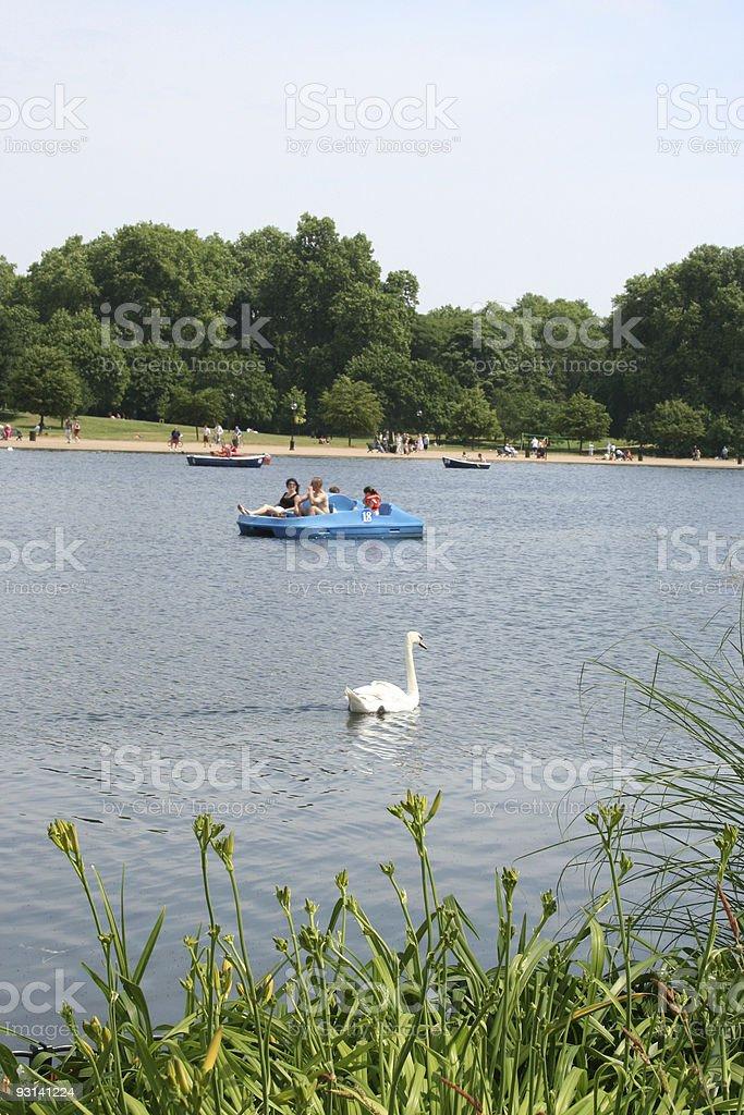 Swan in Serpentine Lake, Hyde Park London stock photo