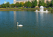 Swan Lake in Astrakhan