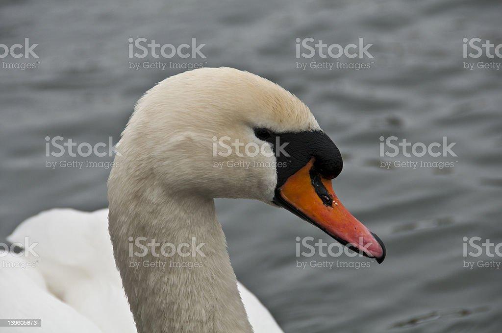 Lago Swan foto royalty-free