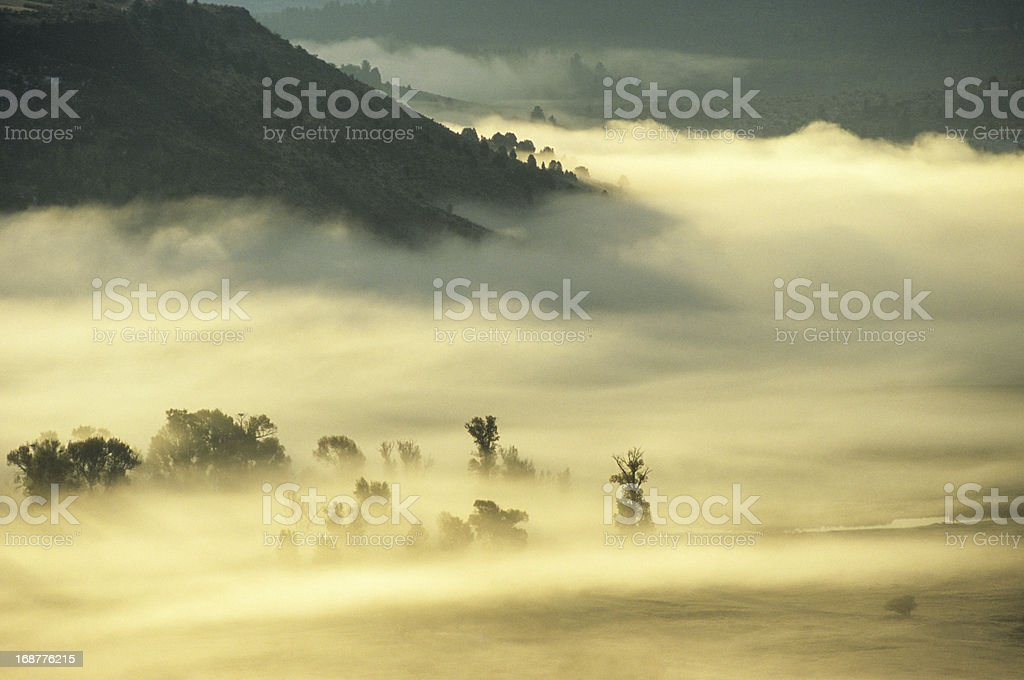 Swan Valley Fog royalty-free stock photo