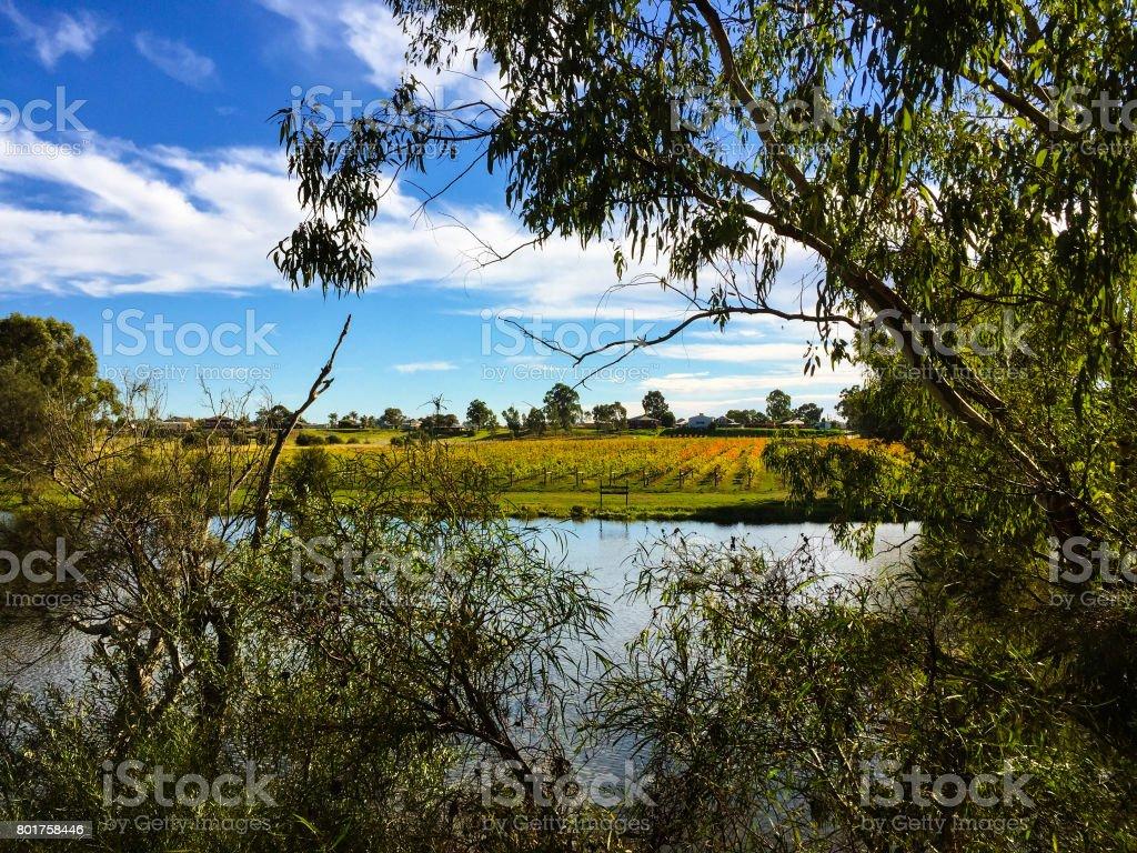 Swan Valley Winery stock photo