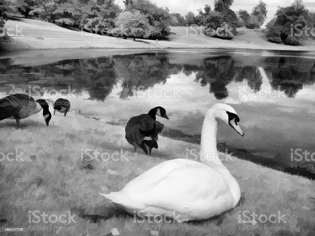 Swans and Ducks at Fountains Abbey, Yorkshire, UK - Infrared stock photo