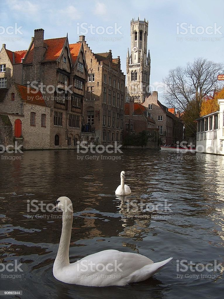 Swans and medeaval buildings bruges belgium royalty-free stock photo