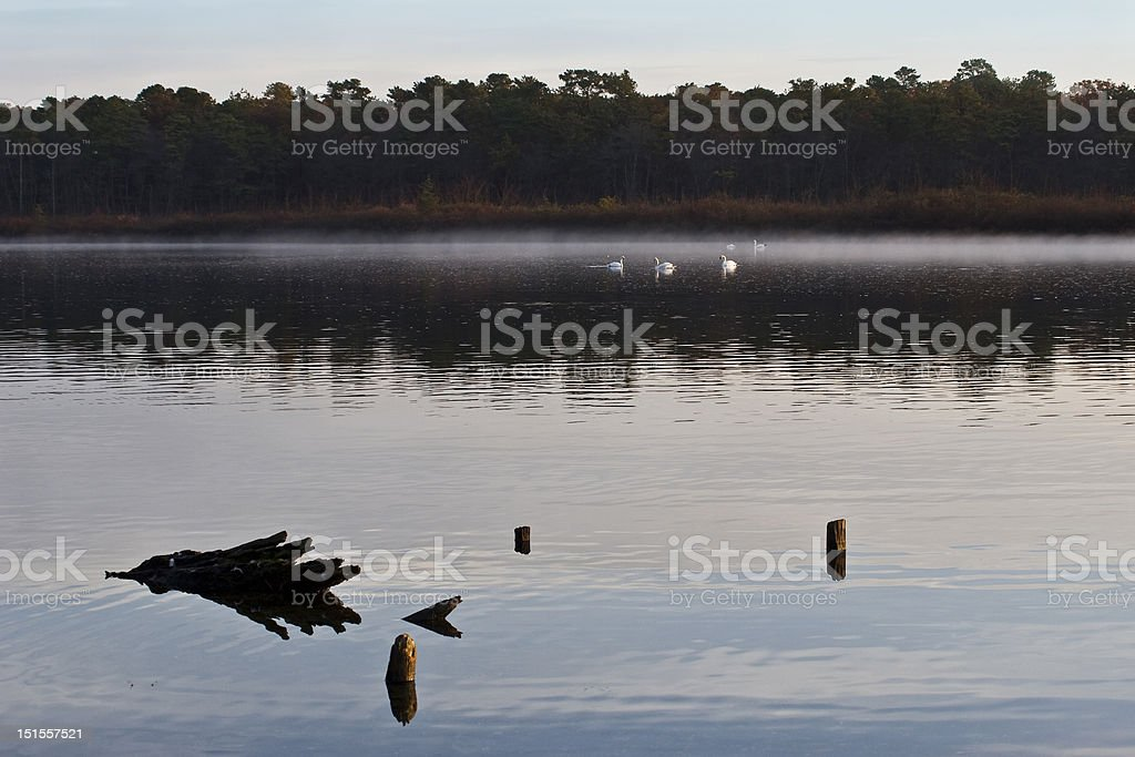 Swans in the Distance stock photo