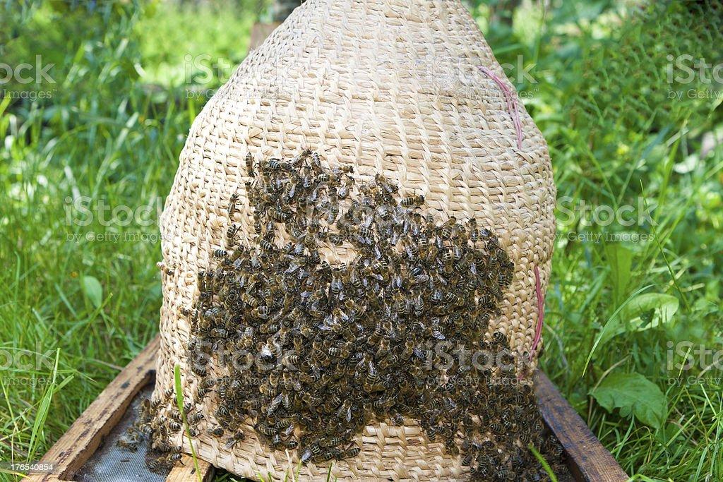 Swarm bee at basket royalty-free stock photo