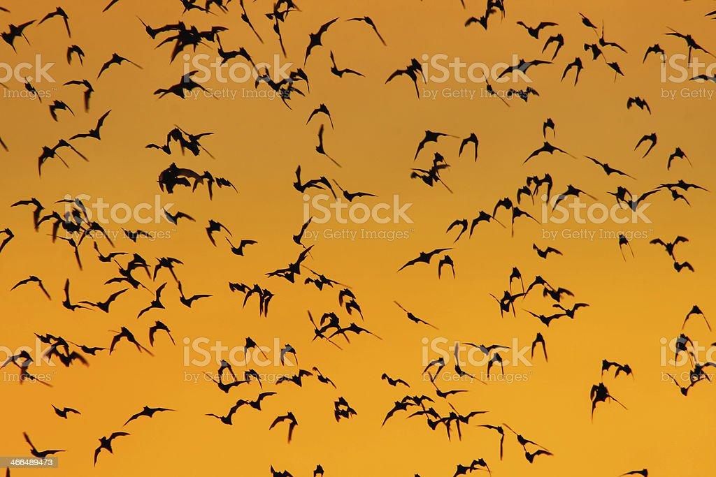 Swarm of Bats stock photo