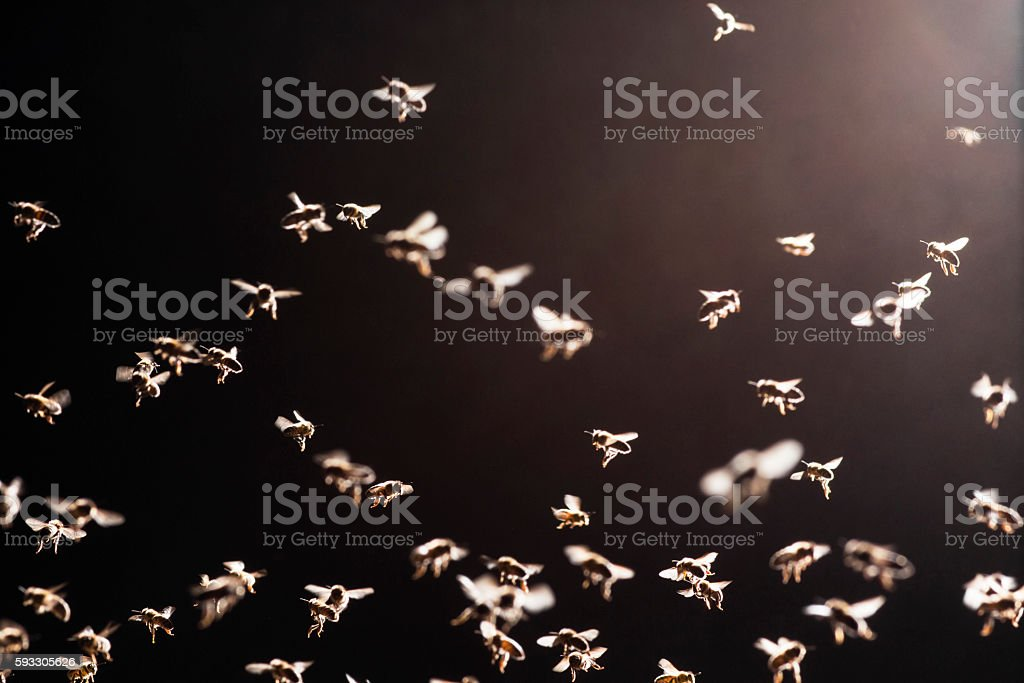 swarm of bees flies over the open evidence stock photo