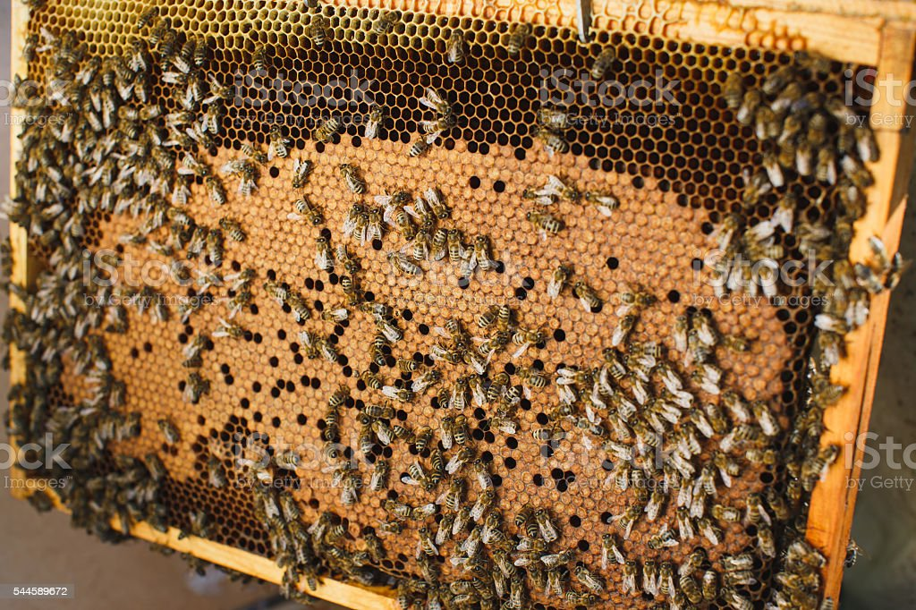 Swarm of bees on beautiful wooden frame stock photo