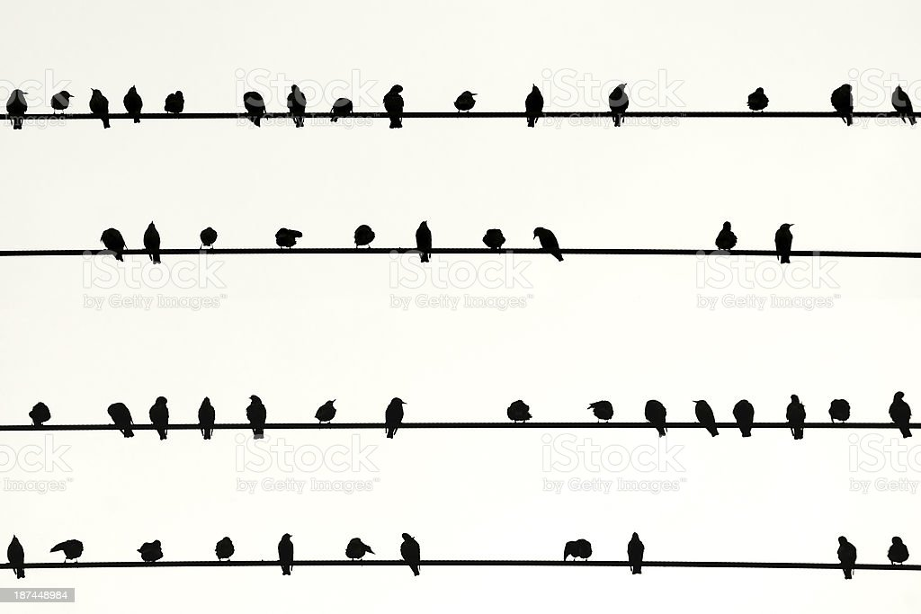 Swarm of birds in a Row royalty-free stock photo