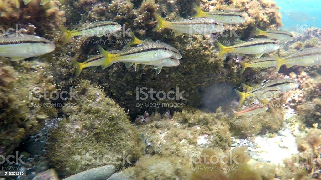 Swarm of fish in underwater diving enviroment stock photo