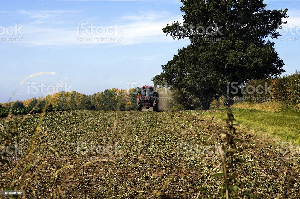 Swarm of flies and approaching tractor royalty-free stock photo
