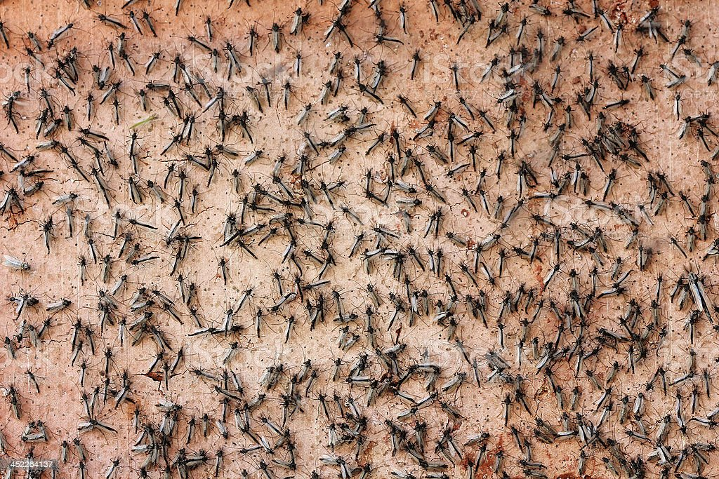 Swarm of insects stock photo