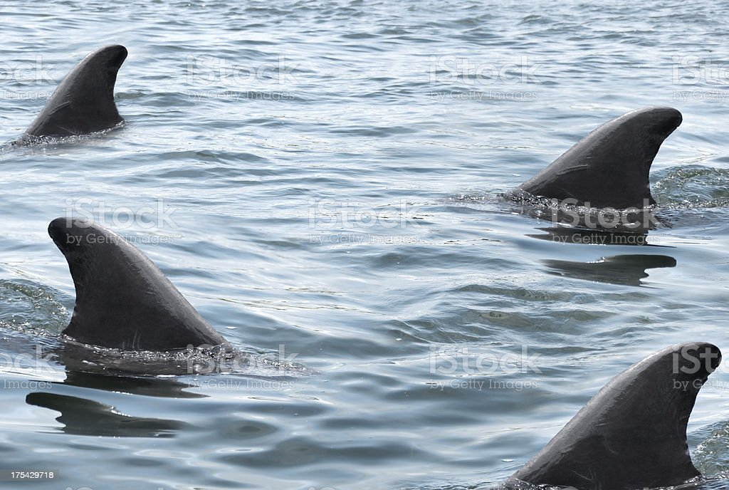 Swarming Sharks stock photo