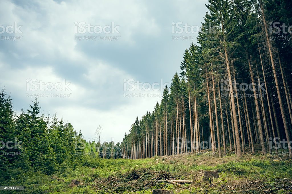 Swathe through the forest stock photo