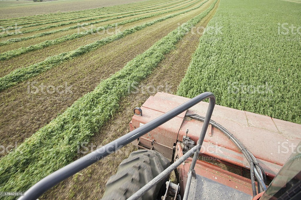 Swather Cutting Alfalfa Crop into Windrows stock photo