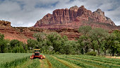 Swather cutting oat hay below Mount Kinesava Rockville Utah