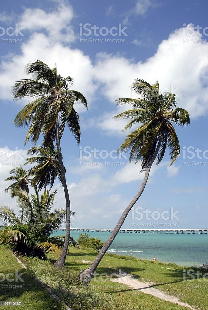 Swaying Palms Florida Keys stock photo