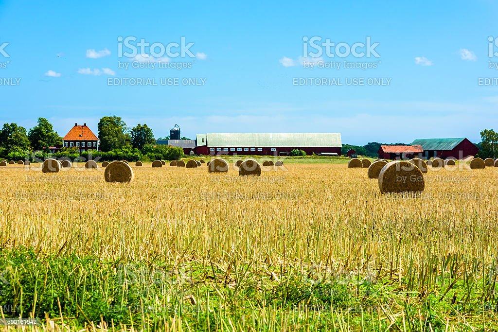 Swedish farmland stock photo