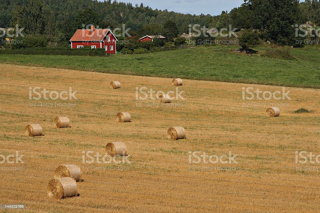 Swedish landscape with typical red house royalty-free stock photo