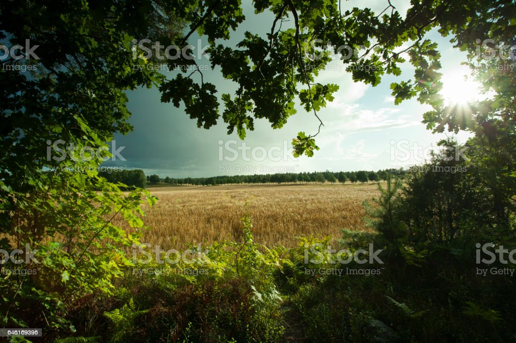 Swedish nature and landscape stock photo