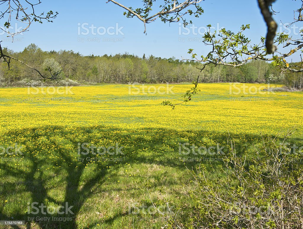 Swedish summer landscape royalty-free stock photo