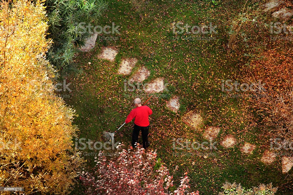 sweeping autumn leaves stock photo
