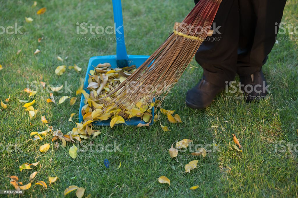 Sweeping leaves in the grass stock photo