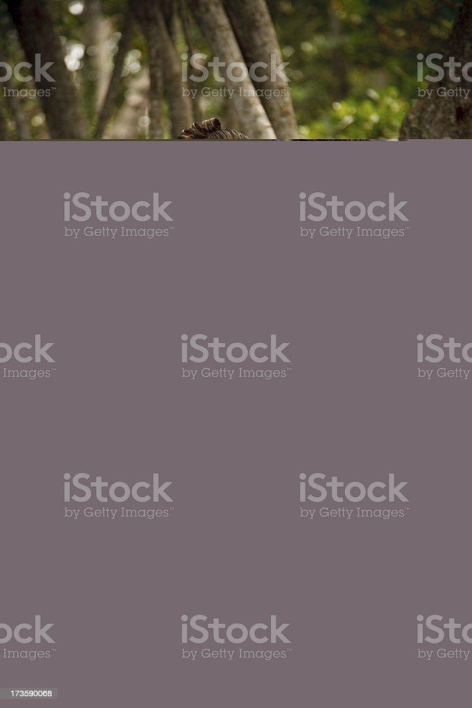 sweet 16 stock photo