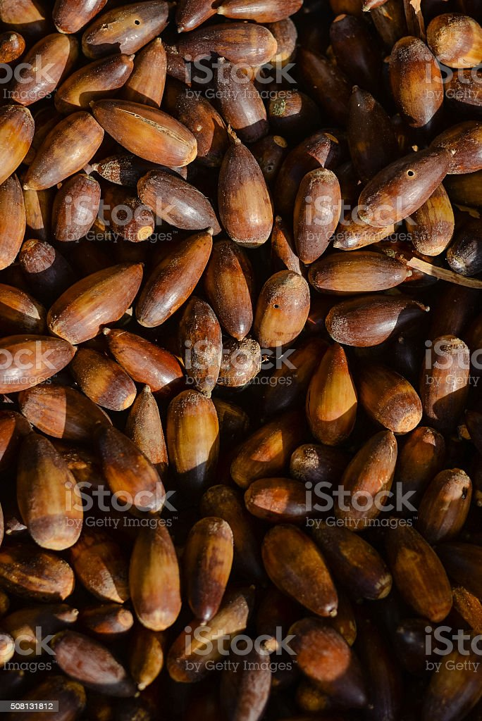 Sweet acorns closeup on market stall stock photo