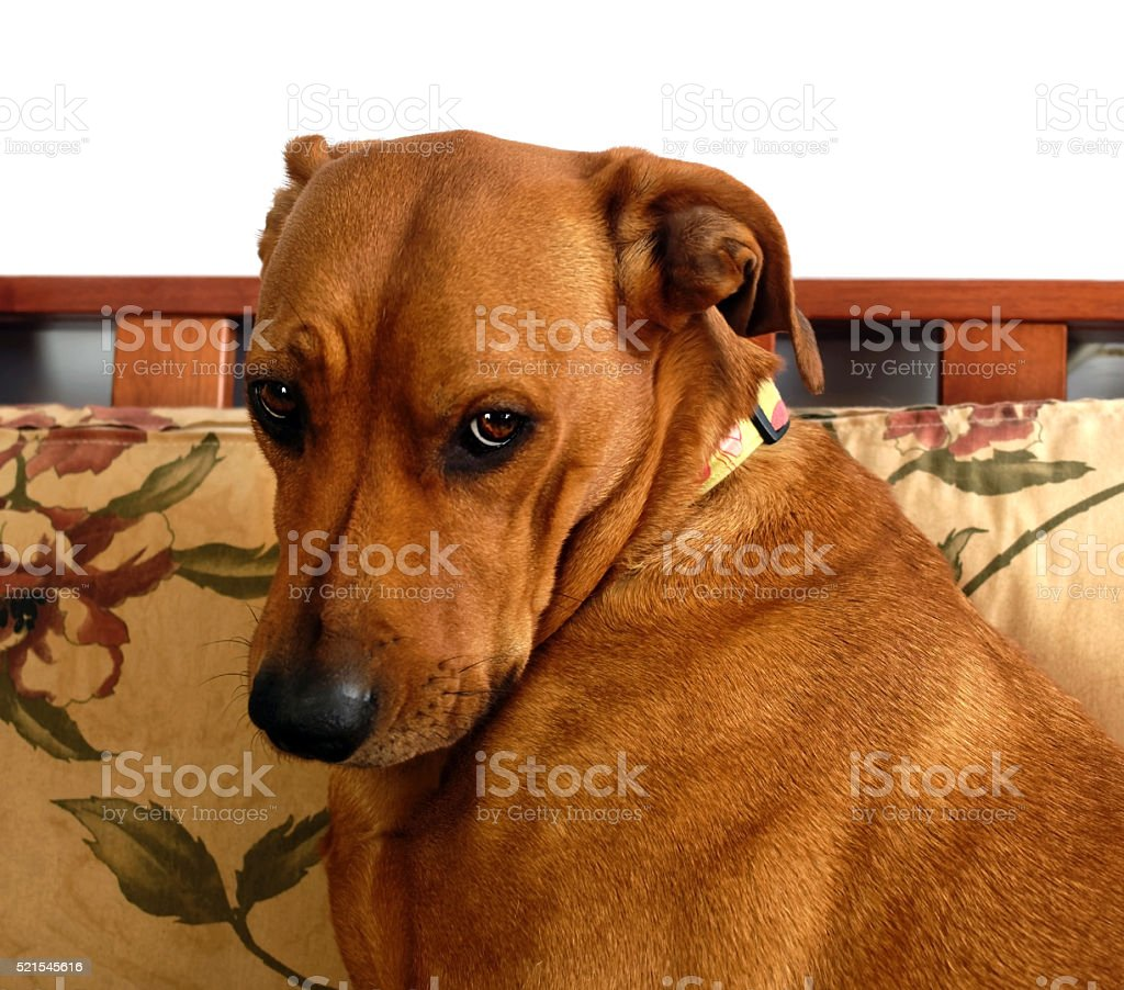 Sweet and Innocent Dog Expression stock photo