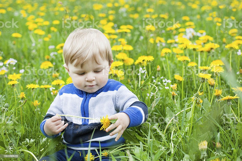 Sweet baby boy in yellow flowers field summer royalty-free stock photo