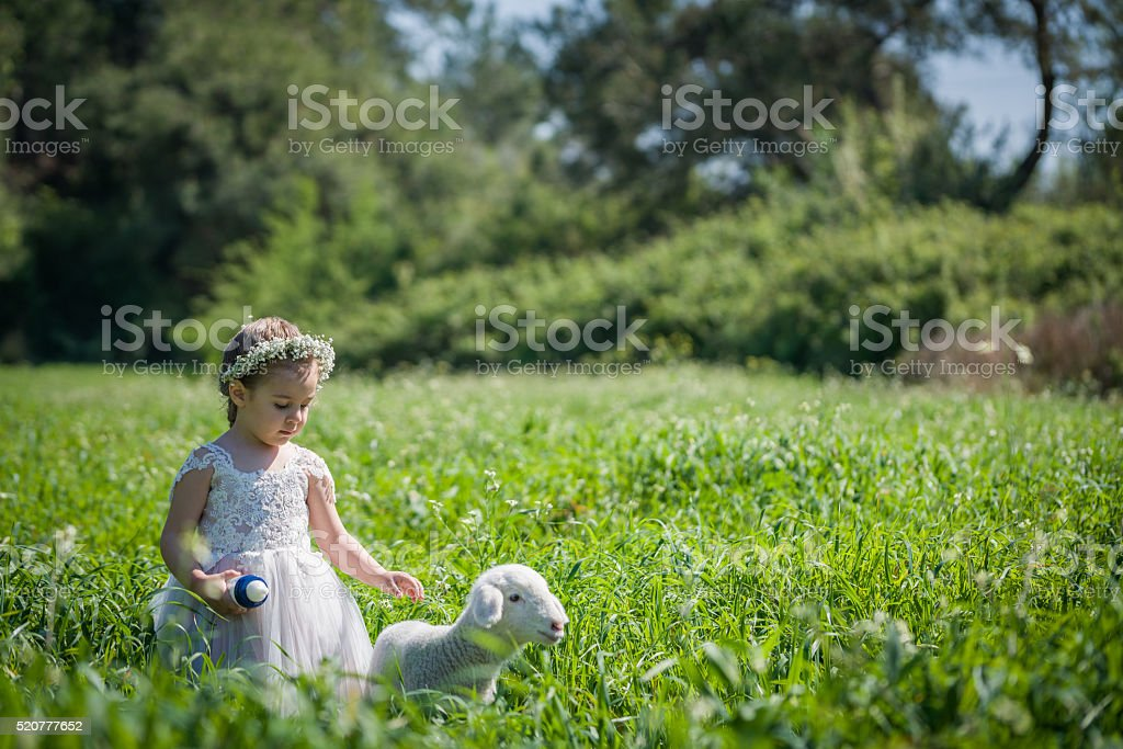 sweet baby girl outdoors with a baby sheep stock photo