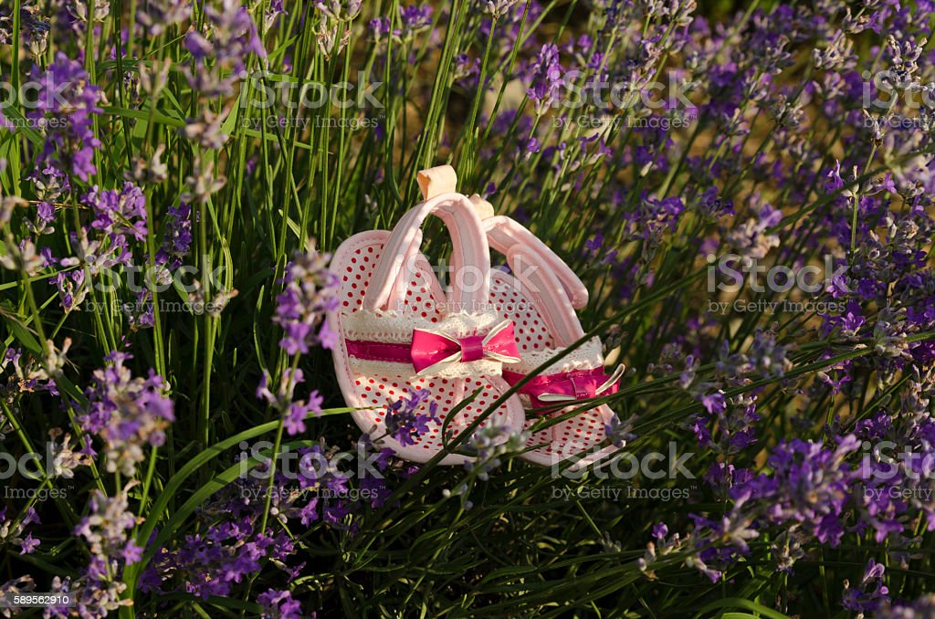 Sweet baby shoes in lavender field stock photo