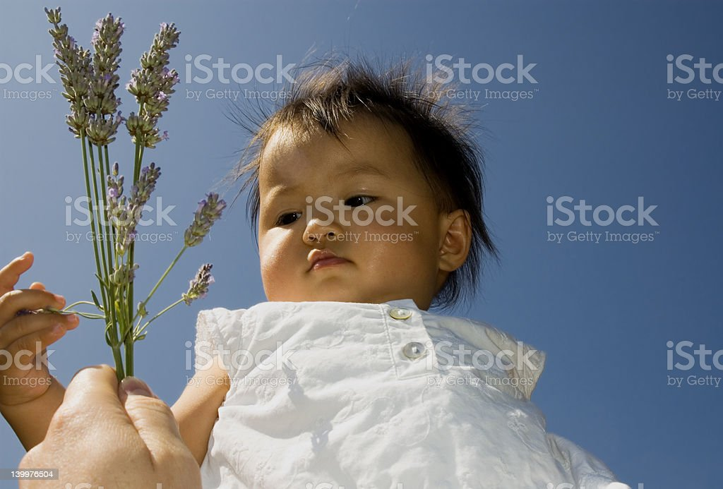 sweet baby with laveder royalty-free stock photo