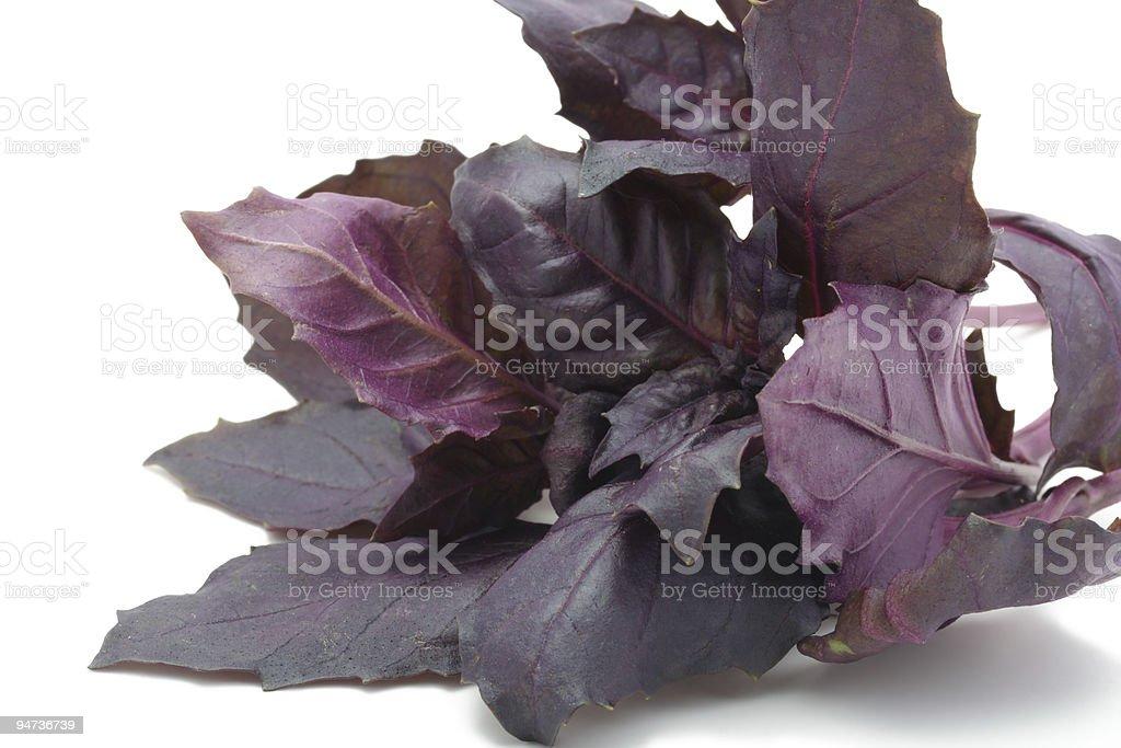 Sweet basil stock photo