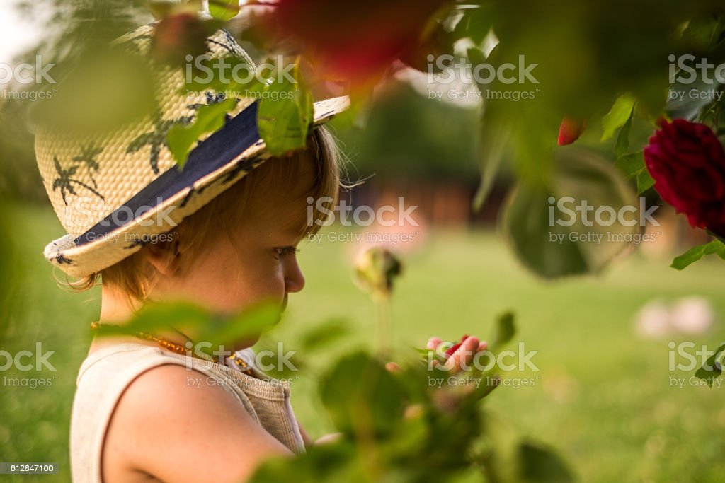 sweet boy with roses tree stock photo