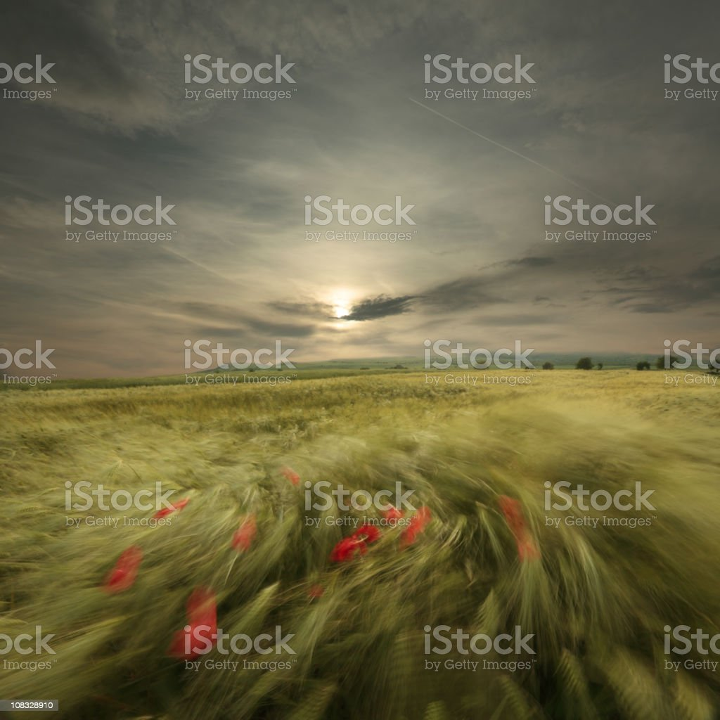 sweet breath of summer royalty-free stock photo
