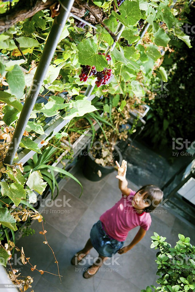 sweet but unreachable grapes royalty-free stock photo