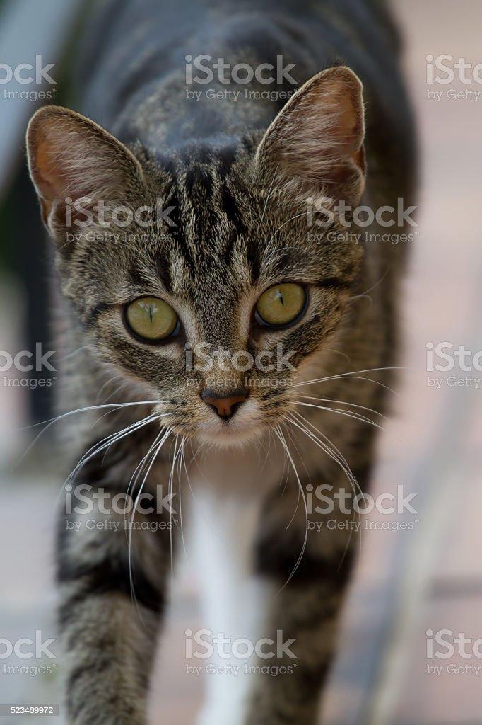 Sweet Cat - Nele stock photo