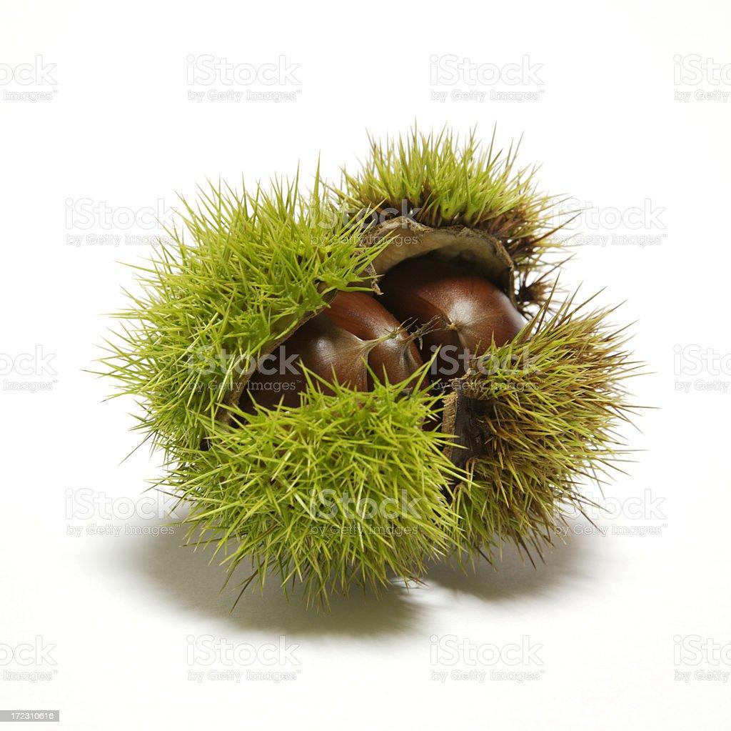 Sweet chestnut royalty-free stock photo