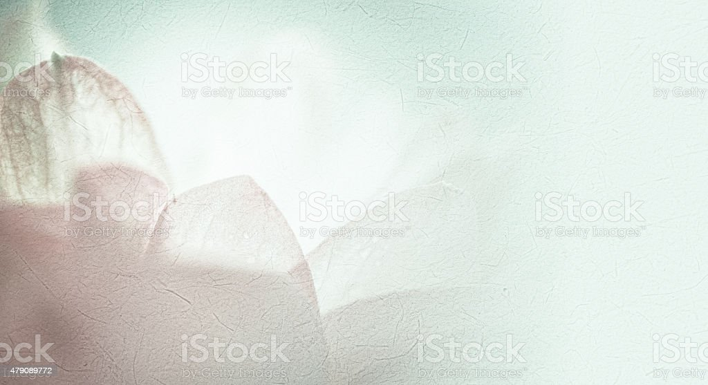 sweet color lotus in blur style on mulberry paper texture stock photo