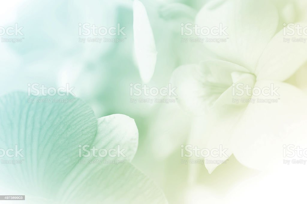 sweet color orchids in soft style stock photo
