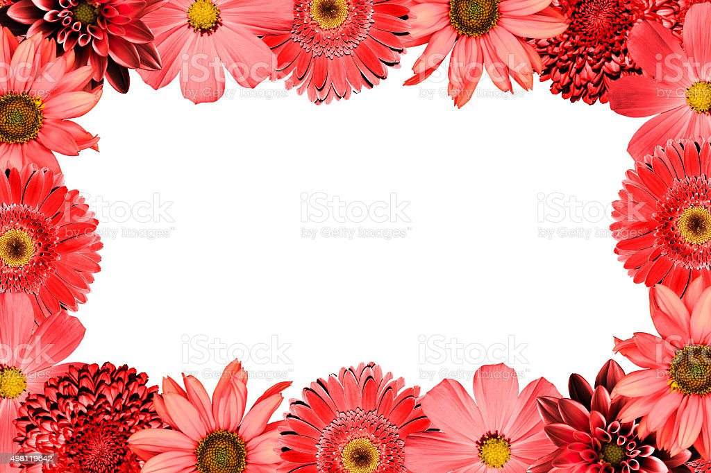 Sweet color petal exotic rose on romantic gradient background stock photo