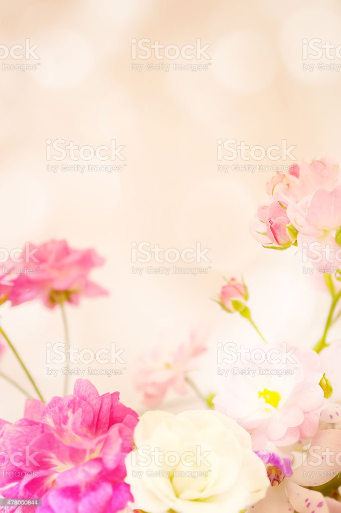 sweet color roses in soft blur style stock photo