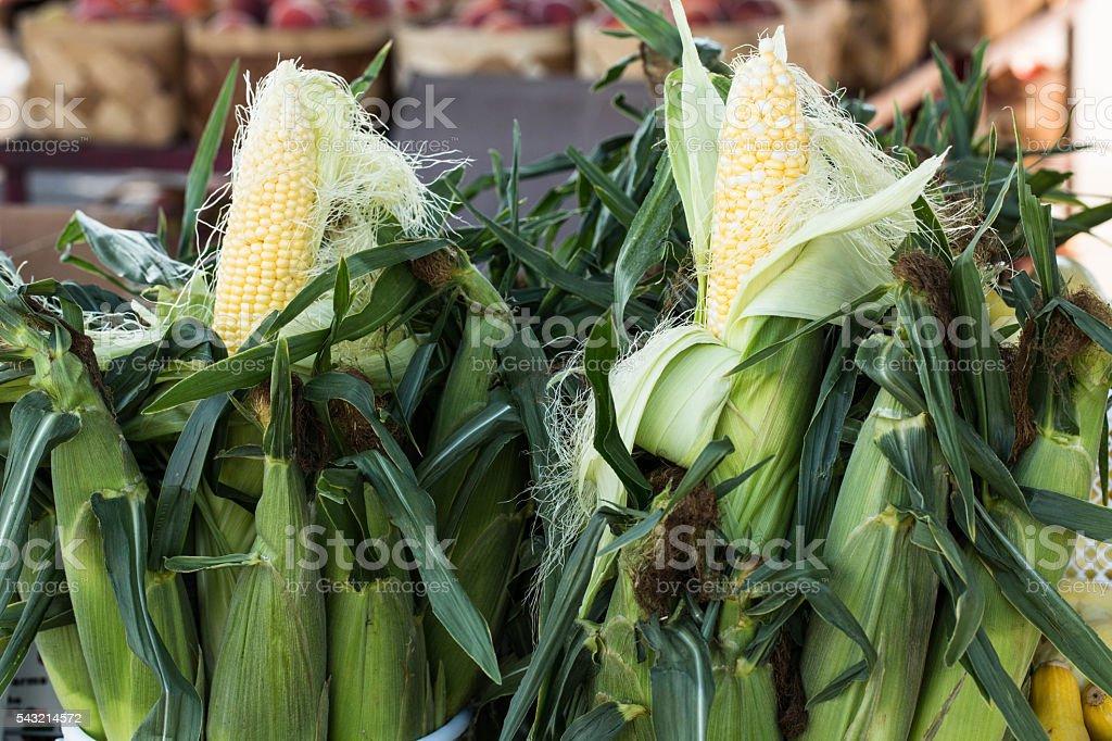 Sweet Corn In Husk at Farmers Market stock photo