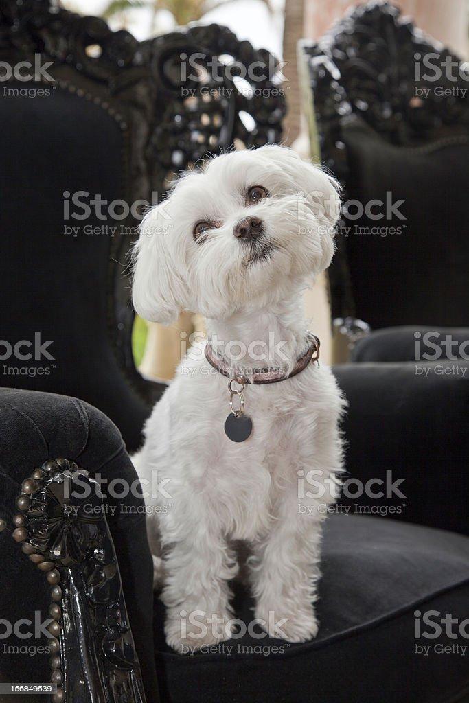 Sweet dog looking cute stock photo