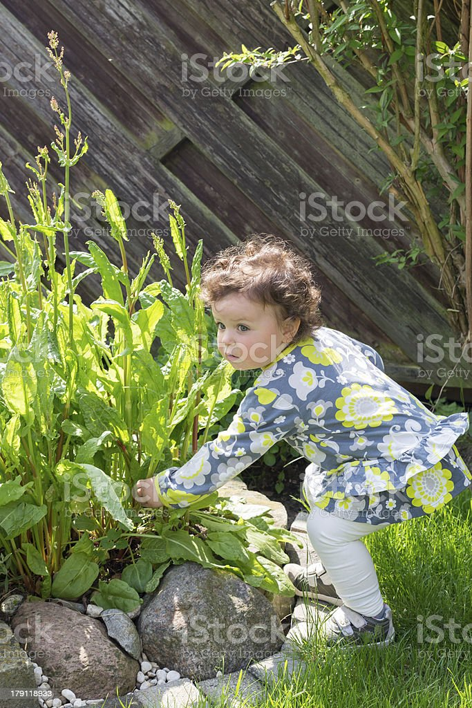 Sweet girl in Garden picking flowers royalty-free stock photo