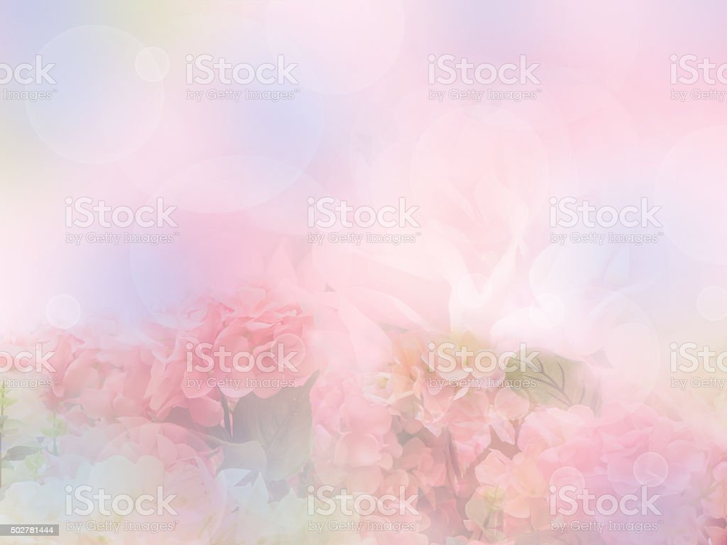 sweet hydrangea flower stock photo