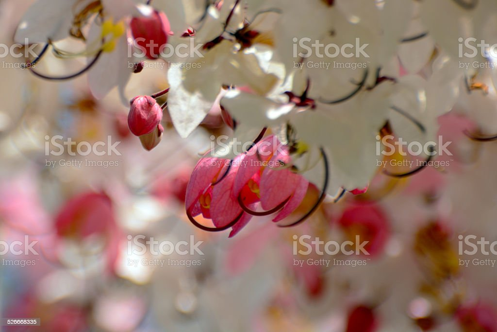 Sweet in Love royalty-free stock photo